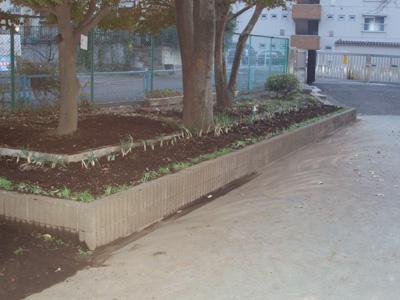 Schoolgarden3