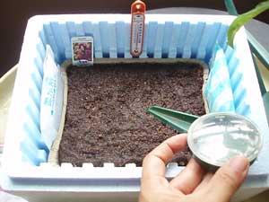 Seedling2